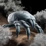 5 Highly Effective Ways to Get Rid of Dust Mites